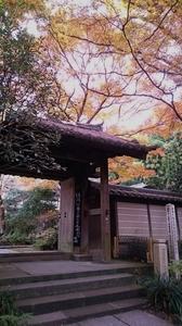 2016.12kamakura (4) (450x800).jpg