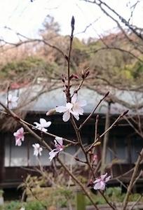 2016.12kamakura (9) (545x800).jpg