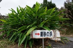 2016.3.1西表島 (13).jpg