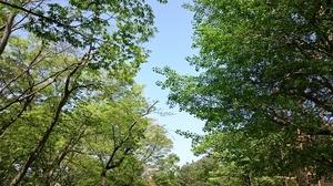 2016.4.26siohigari (4) (800x450).jpg