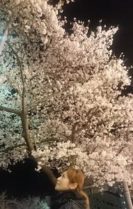 2016.4.6sakura (1).jpg