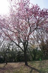 本牧山頂公園2017.4 (26) (531x800).jpg